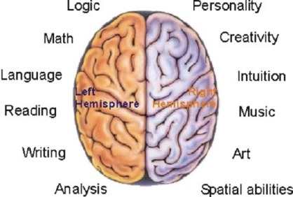 brain_hemispheres_1